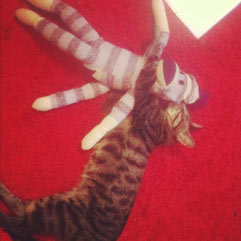 Cat Sock Monkey